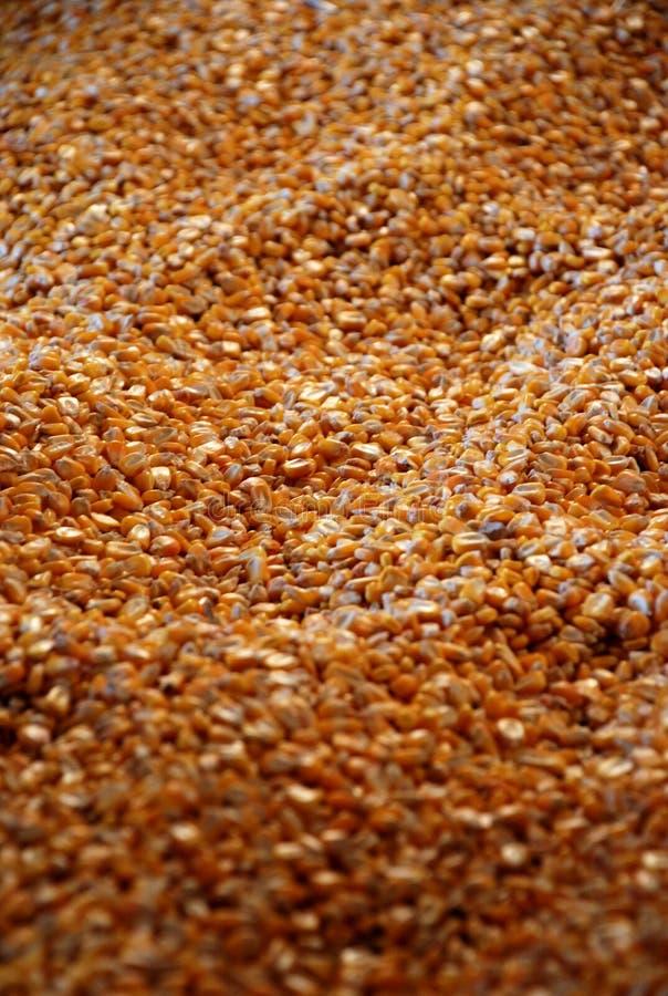 Feed Corn stock photography