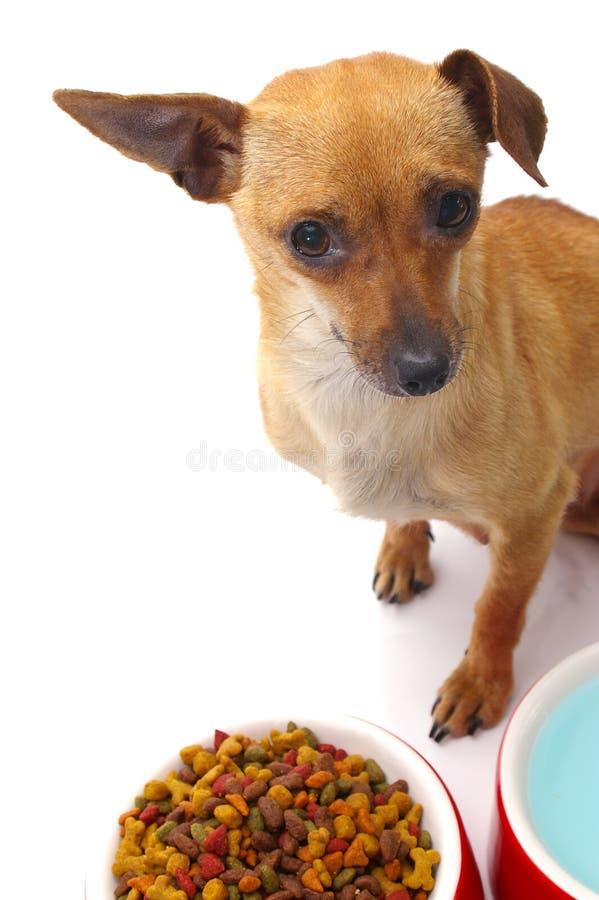 Feed Me stock photos