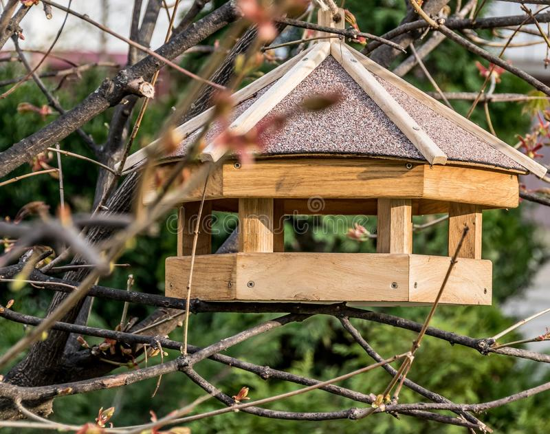 Feeder for birds on the branch royalty free stock images
