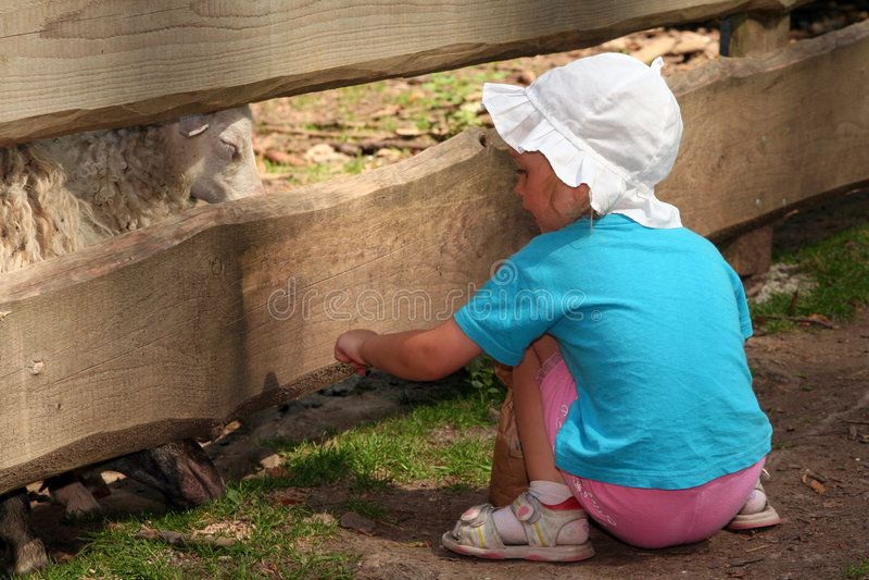 Feeding animals stock photography