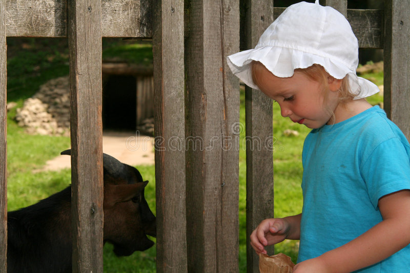 Download Feeding animal stock photo. Image of interaction, blond - 3103230