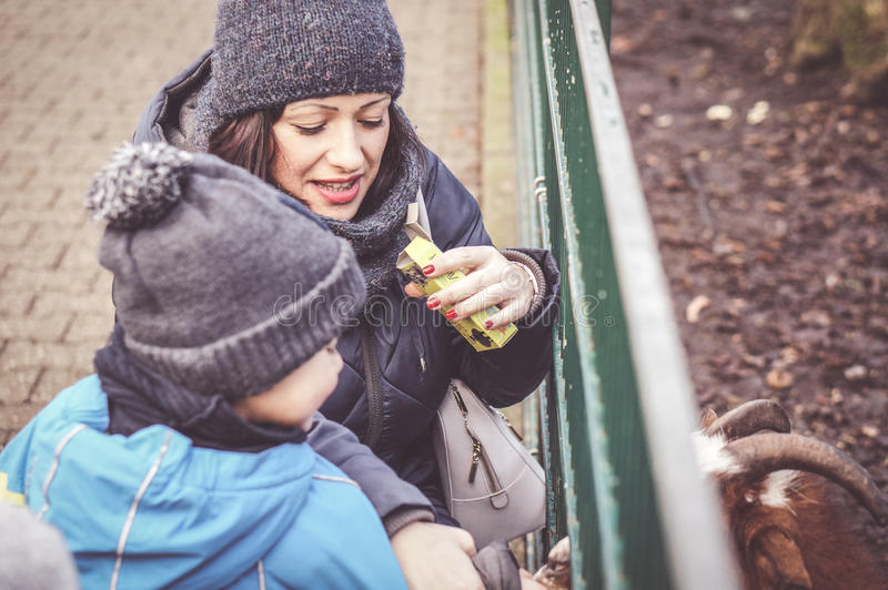Feeding animals. ALSDORF, GERMANY - DECEMBER 27, 2016: Unidentified woman and child feeding animals at the Alsdorfer Tierpark royalty free stock photography