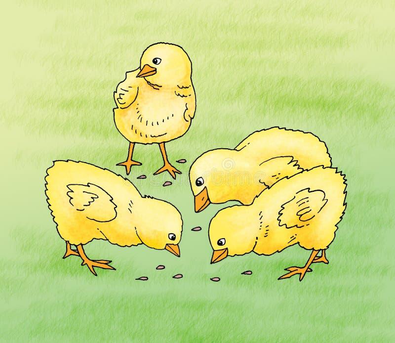 Feeding of baby chicks. Baby chicks illustrated during feeding royalty free illustration