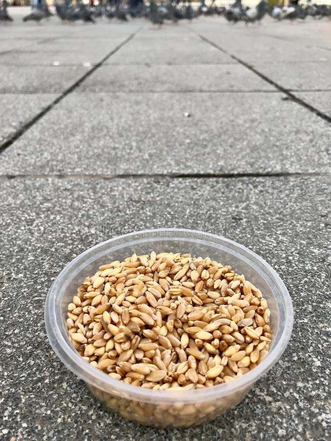 Feeding Birds with Sunflower / Kernel Seeds in Istanbul Streets. / Turkey. stock photography