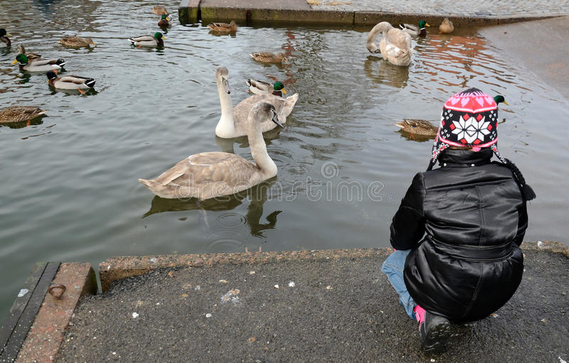 Download Feeding birds in winter stock photo. Image of flock, coast - 22858058