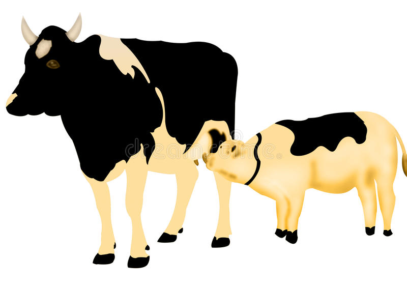 Download Feeding calf stock illustration. Illustration of cattle - 10425850