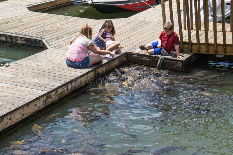 Feeding Carps at Smith Mountain Lake. Franklin County, VA – May 14th: Mother and children feed the carp at Bridgewater Plaza Marina located at Smith royalty free stock images