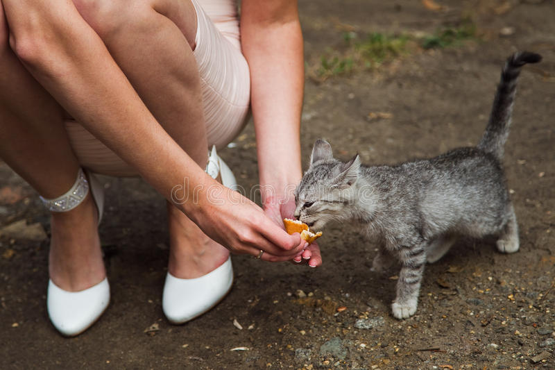 Download Feeding Cat Royalty Free Stock Photos - Image: 27275008