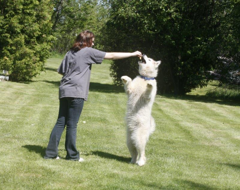 Feeding the dog royalty free stock photo