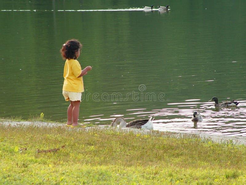 Download Feeding Ducks stock image. Image of feeding, girl, baby, ducks - 6339