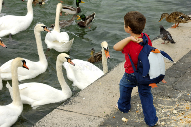 Feeding the ducks. At the edge of a lake, a small boy, with a penguin back-pack, throws a piece of bread for the swans and ducks royalty free stock photos