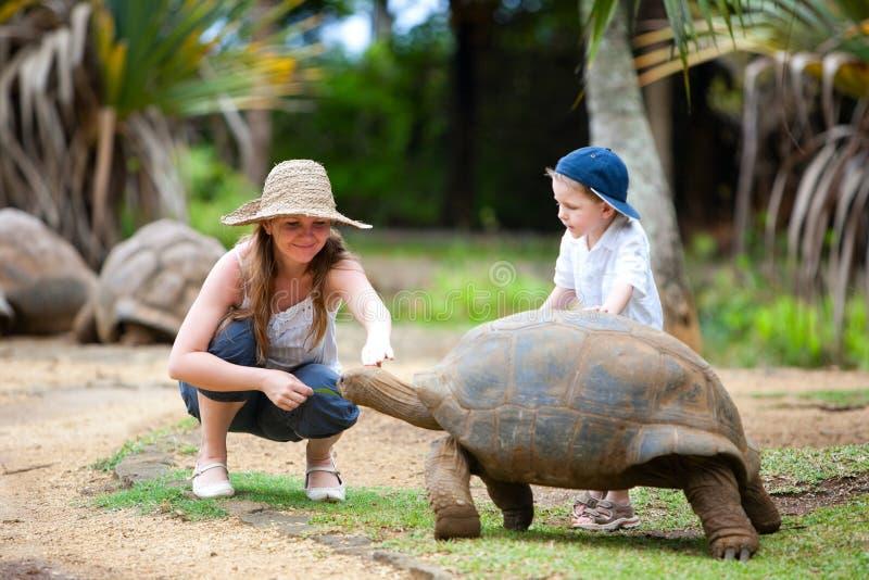 Feeding Giant Turtle stock photos