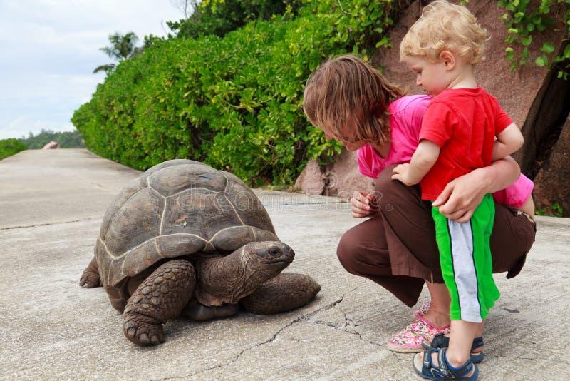 Feeding giant turtle stock photo