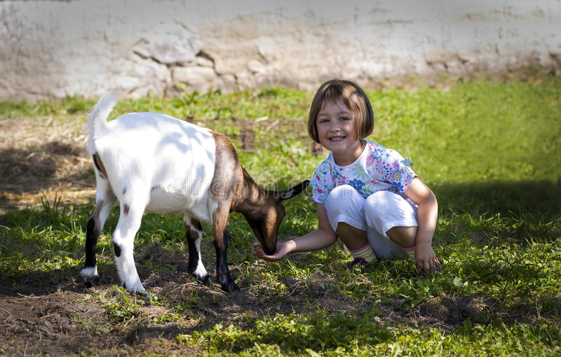 Feeding goat 7 stock images