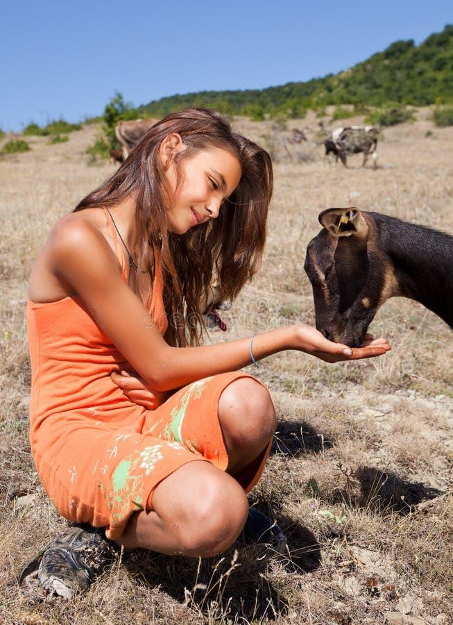 Feeding The Goats Stock Image
