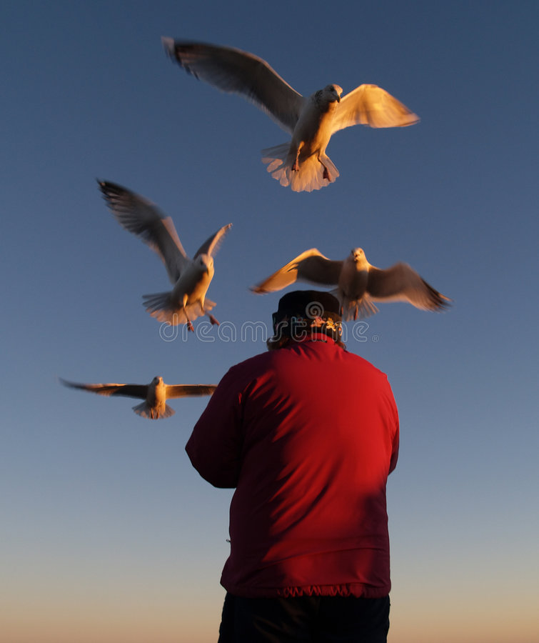 Download Feeding The Gulls Royalty Free Stock Photo - Image: 1707705