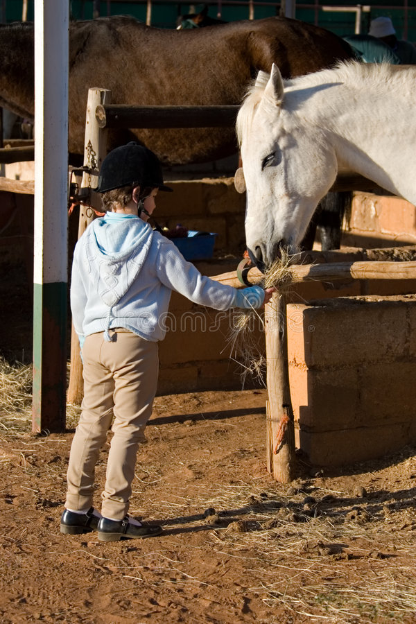 Feeding the horse royalty free stock images