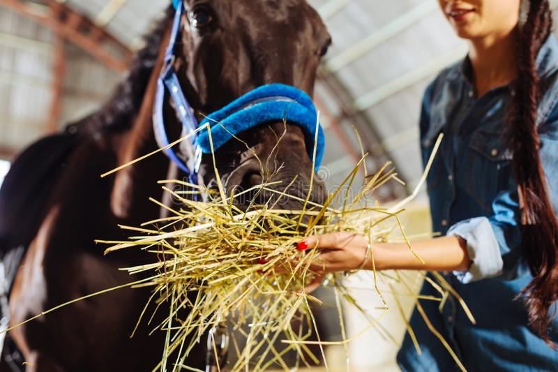 Caring horsewoman feeling lovely while feeding her horse. Feeding horse. Caring appealing horsewoman wearing jeans clothes feeling lovely while feeding her horse stock photo