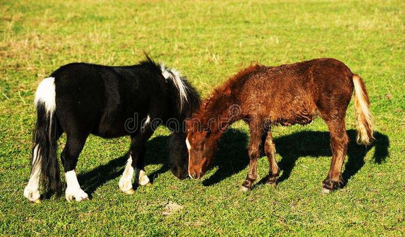 Download Feeding horses stock image. Image of equestrian, green - 28814131