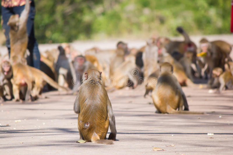 Feeding the monkeys. Feeding the monkeys royalty free stock image