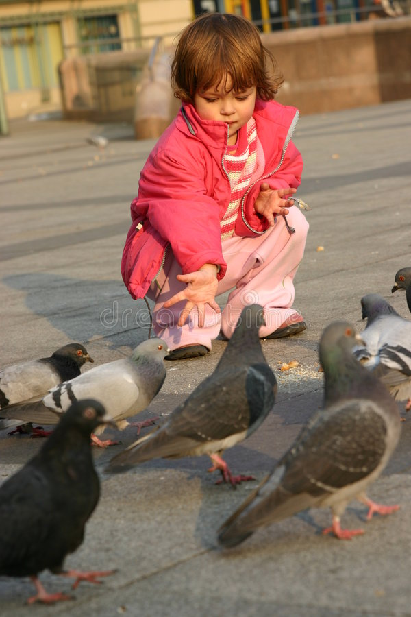 Feeding pigeons royalty free stock photo