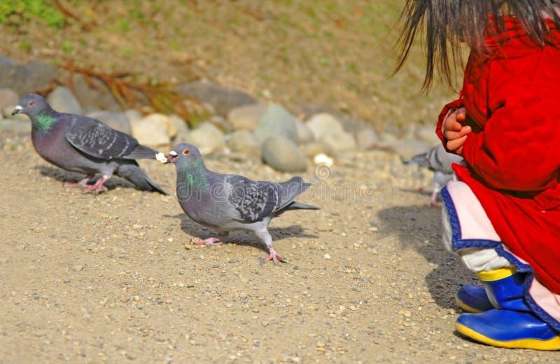Download Feeding pigeons stock photo. Image of child, innocent - 2105998