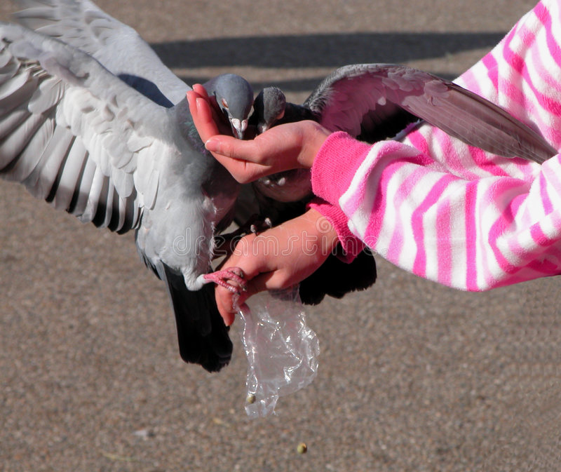 Download Feeding pigeons stock photo. Image of hungry, girl, wing - 57446