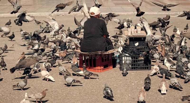 Feeding the pigeons. Elderly woman feeding pigeons on the street. Old lonely woman feeding birds in the center of the stock image