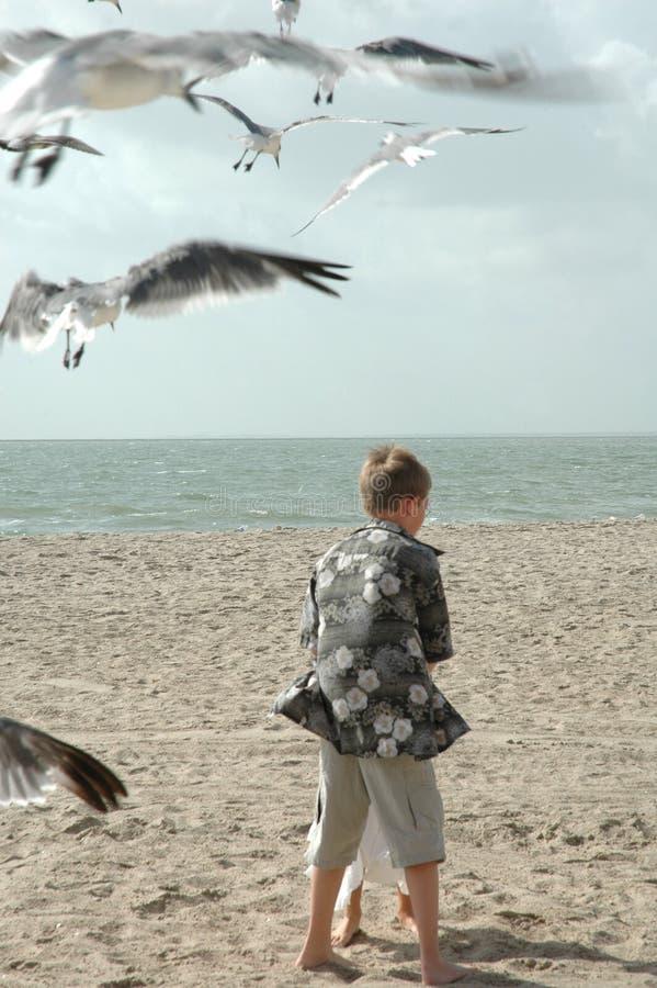 Free Feeding Seagulls Royalty Free Stock Photography - 1295757