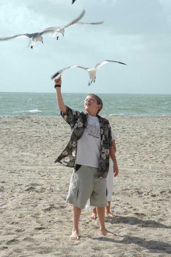 Free Feeding Seagulls Royalty Free Stock Images - 1295759