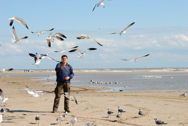 Feeding The Seagulls Stock Images