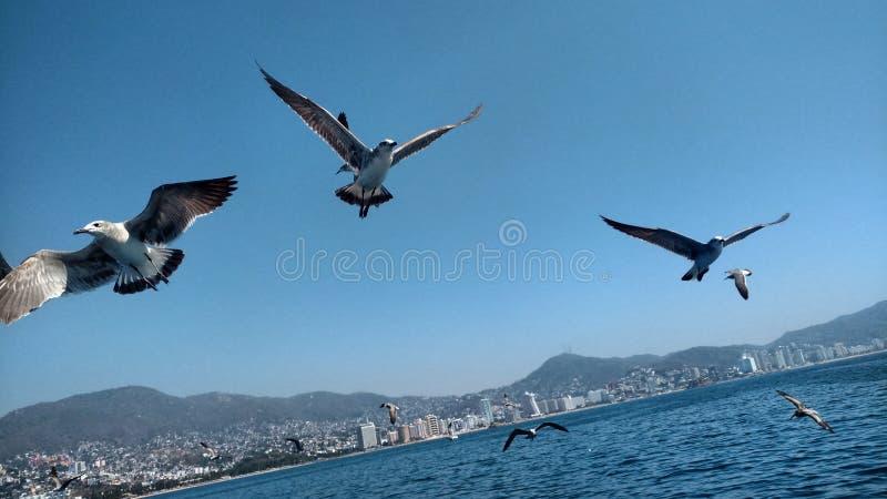 Feeding the seagulls stock photos