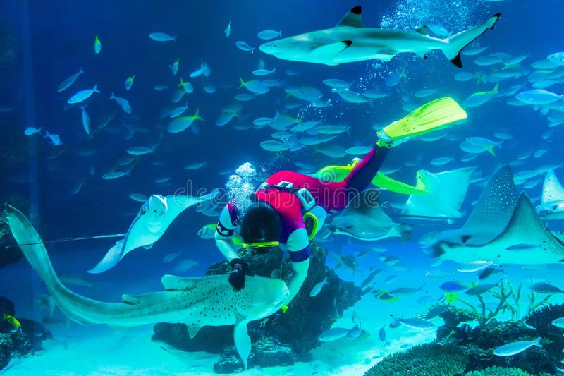 Feeding Sharks in Aquarium stock photo