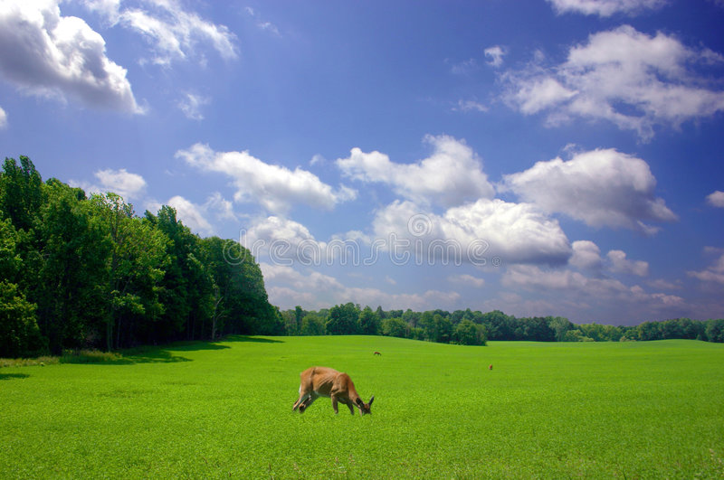 Download Feeding Time stock image. Image of tranquil, clouds, grazing - 153565