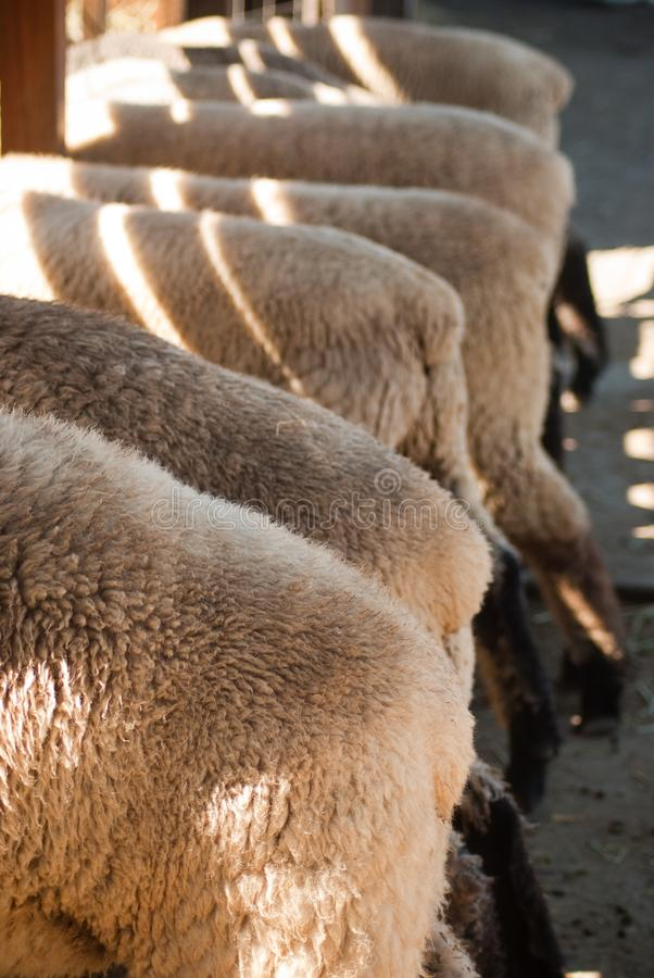 Download Feeding time stock photo. Image of busy, fremont, feeding - 15663448