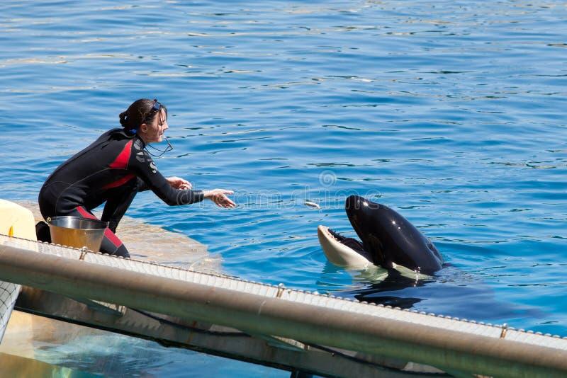 Feeding Whales Editorial Photo