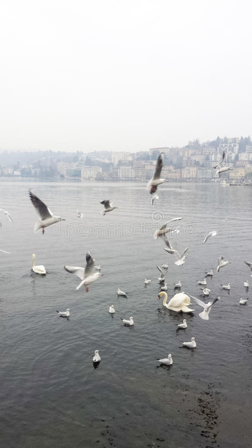 Free Feeding Wild Birds Stock Images - 96797134