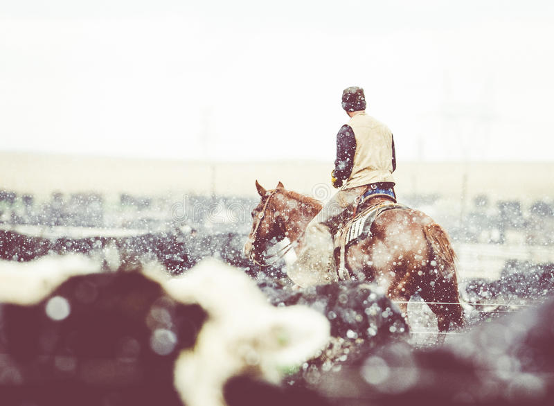 Feedlot Cowboy on Horseback at Work in the Snow. Feedlot Cowboy at Work in the Snow in a Cattle Pen stock photography