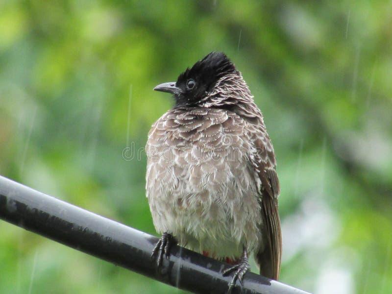 Feeling cool bird into the rain. Beauty royalty free stock photo