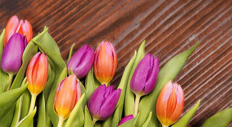 Feeling spring, coloured tulips stock photo