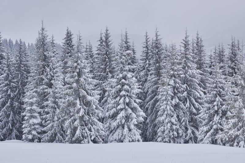 Feenhafte Winterlandschaft mit Tannenbäumen und Schneefällen Getrennt auf weißem Hintergrund stockfotos