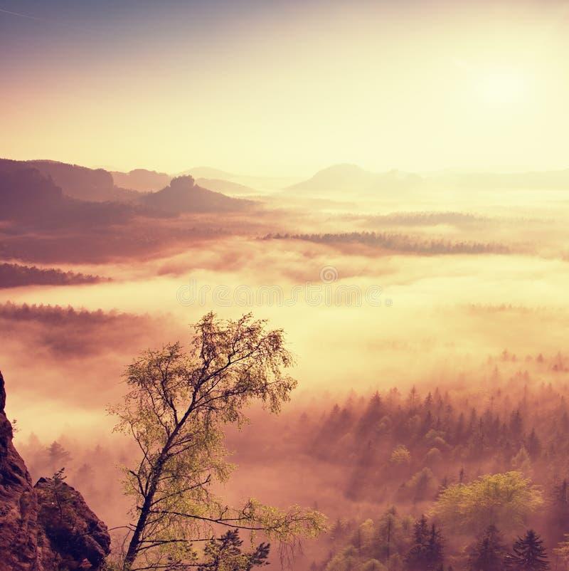 Feenhafter Tagesanbruch Nebelhaft, in schöne Hügel weckend Gefiltertes Bild: verarbeiteter Weinleseeffekt lizenzfreie stockfotografie