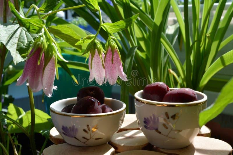 Feenhaftes Stillleben mit Kirschen in den netten Schüsseln auf Holztisch unter schönen Blumen beschmutzten Glockenblumenglockenbl lizenzfreie stockfotos