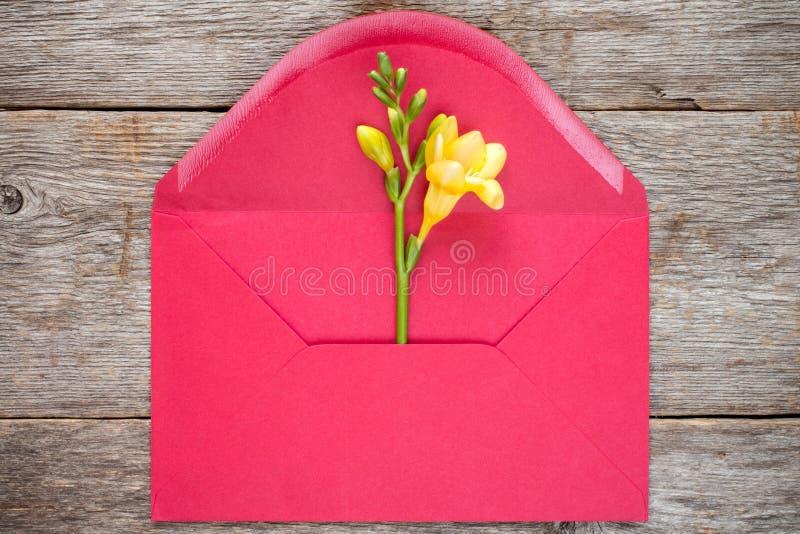 Feesia blomma i rött kuvert royaltyfria foton