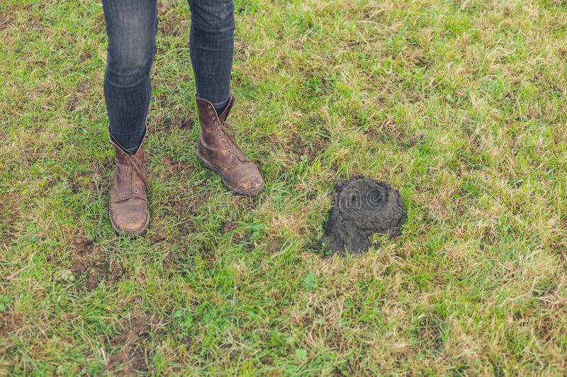 Feet and cow dung. The feet of a person in a field next to a steaming pile of cow dung royalty free stock photos