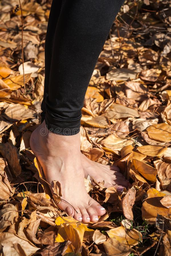 Feet in Fallen Leaves. Beautiful female feet are portrayed standing in fallen aspen and cottonwood leaves stock photos