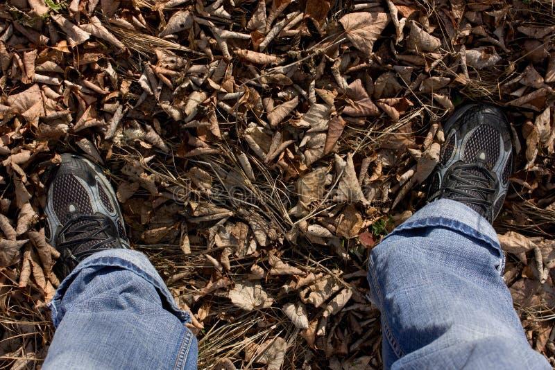 Feet on leaves stock photo