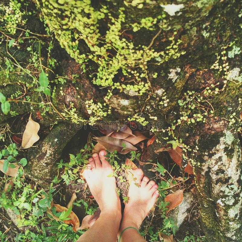 Feet in Nature royalty free stock photos