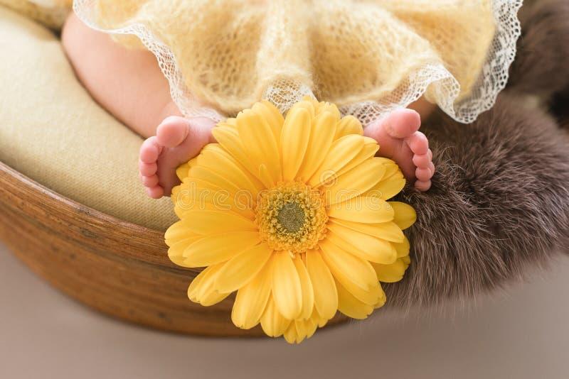 Feet of a newborn girl, little ballerina in fluffy points, dancer tired, tutu skirt, newborn stock photography