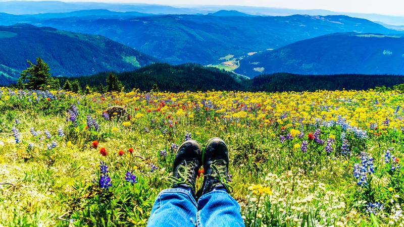 Feet resting in a field of wildflowers. In the high alpine of the Shuswap Highlands in central British Columbia Canada royalty free stock images